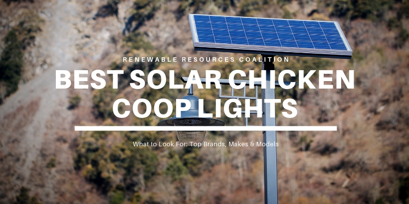 Best Solar Chicken Coop Lights
